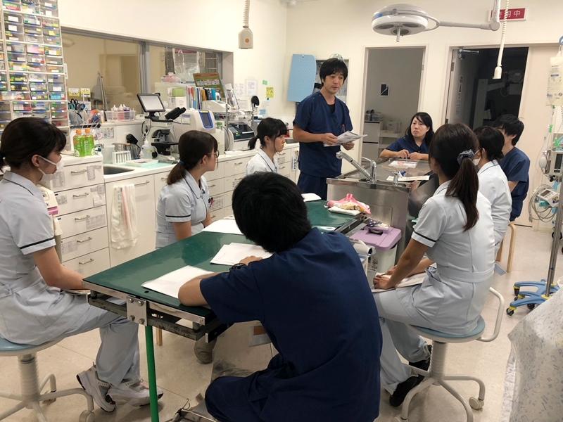 動物病院のスタッフ教育の様子